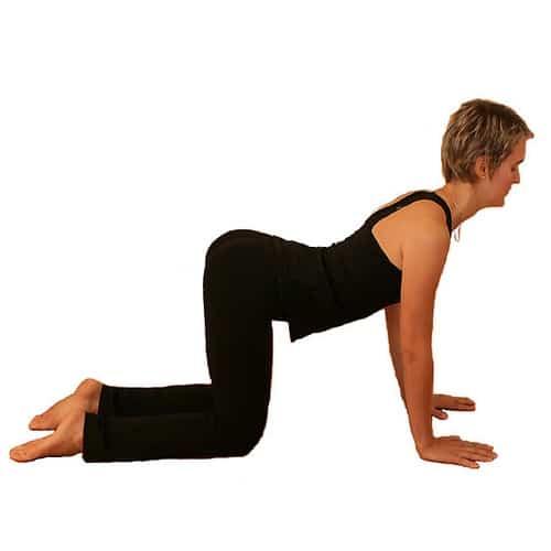 yoga-vache