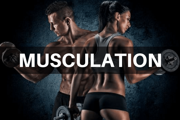 nos articles musculation