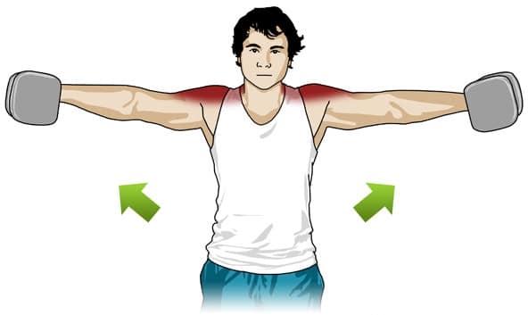 Musculation haltères élévation latérale