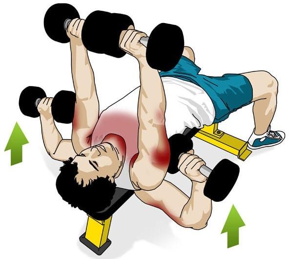 Musculation haltères développé couché