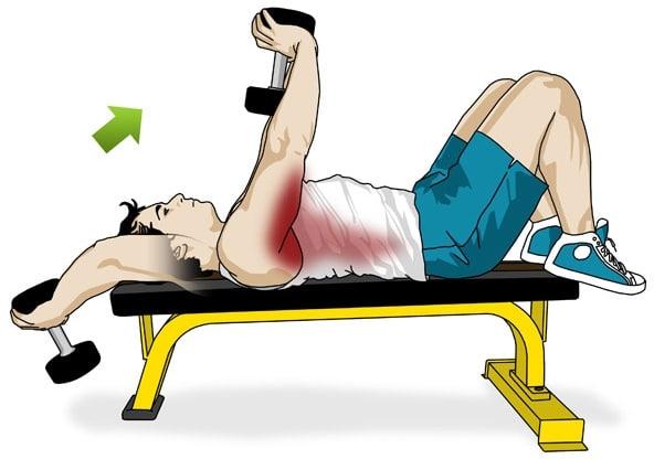 Musculation haltères pullover