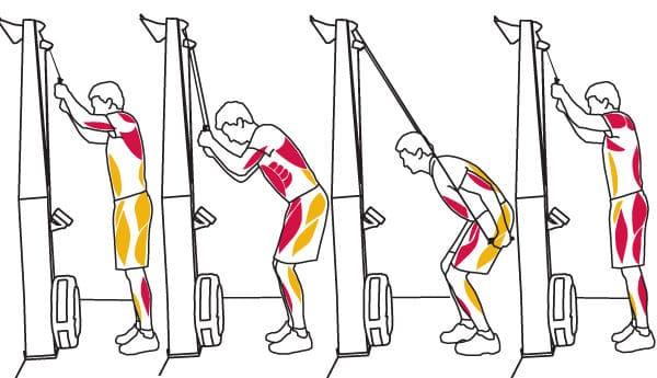 SkiErg muscles sollicités