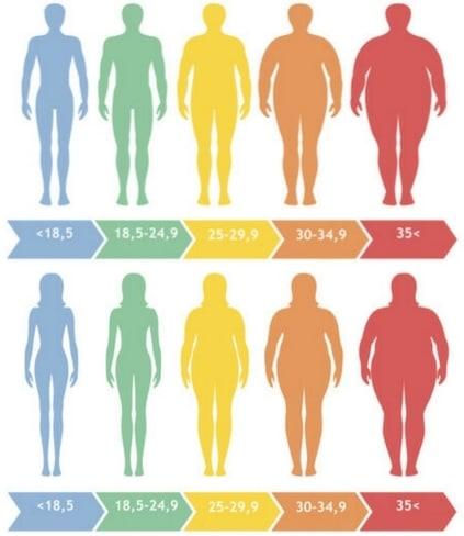Calculer masse musculaire grasse IMC