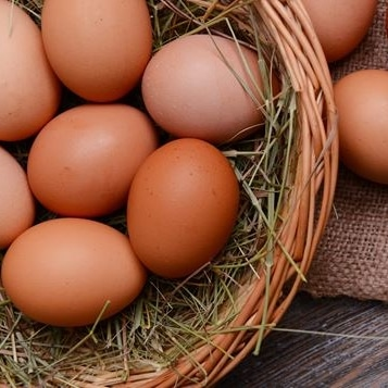 Aliments riches Oméga 3 oeufs bio