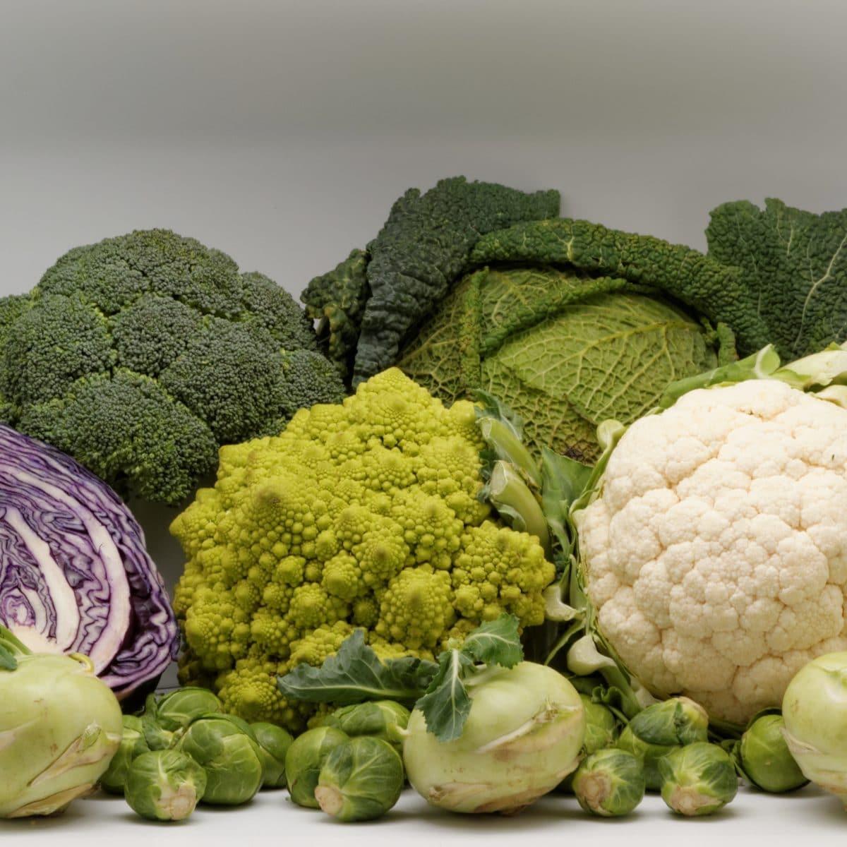 Vitamines minéraux utiles organisme vitamine K