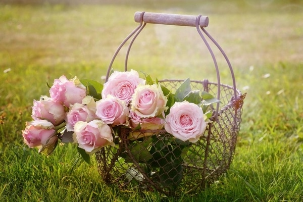 entretenir rose eternelle