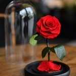fabriquer rose eternelle