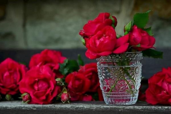 faire rose eternelle