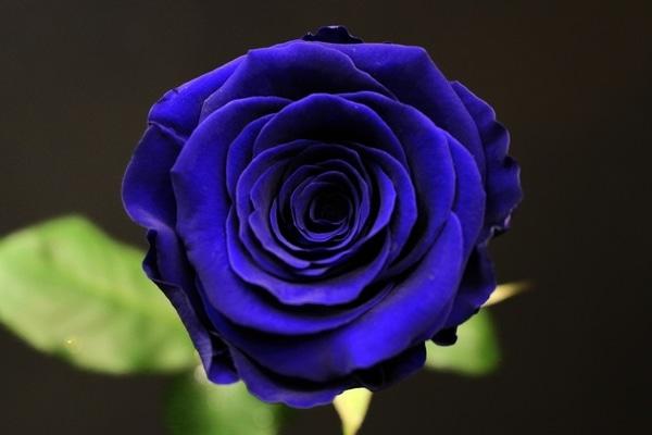 teinter rose eternelle