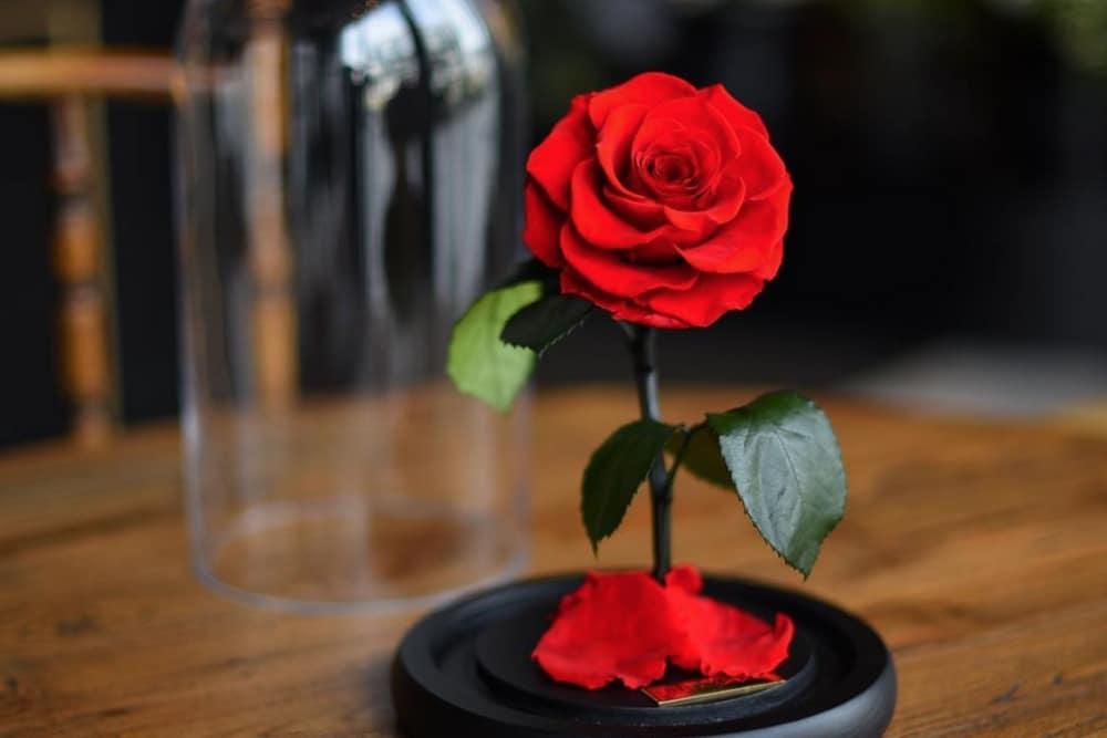 qu'est ce qu'une rose éternelle