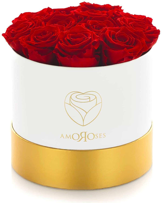 rose stabilisée amoroses