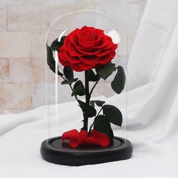 rose stabilisée fleur éternelle