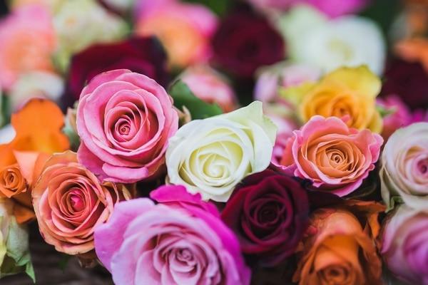 rose stabilisée signification couleur